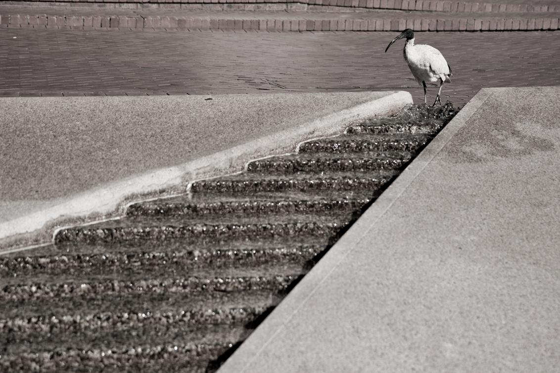 koningvogel - . - foto door haikodejong op 09-08-2010 - deze foto bevat: vogel