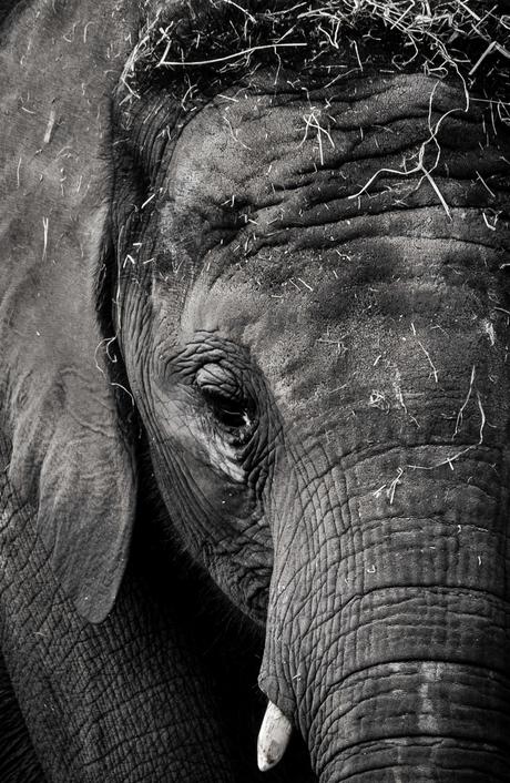 Elephant Fine Art