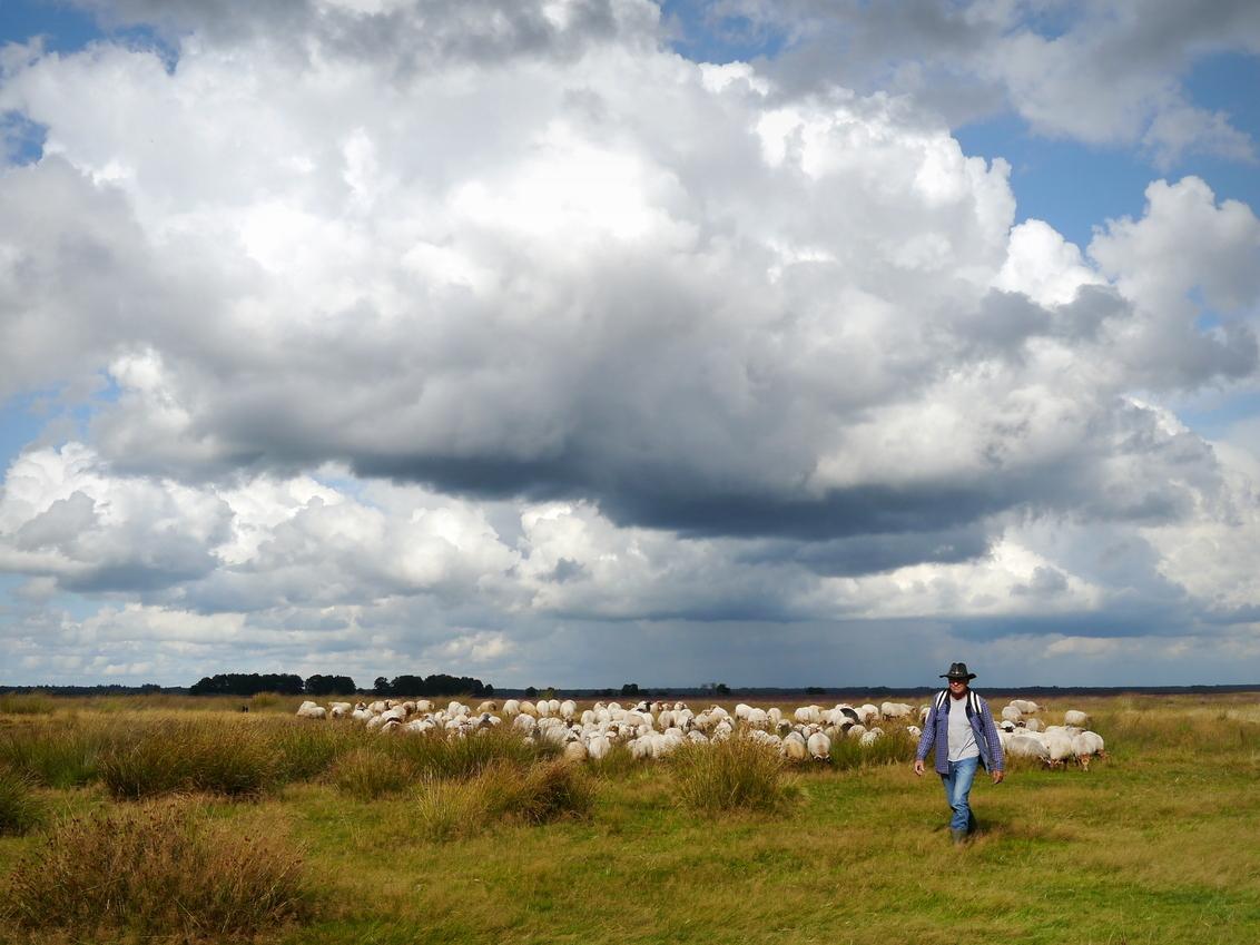 en daar komt de kudde met herder... - Op het Dwingelderveld bij Ruinen is 1 van de 2 schaapskooien van het gebied. Jammer dat de herder z'n staf niet bij zich heeft...dat hoort toch eigen - foto door InavanDelden op 05-10-2014 - deze foto bevat: wolken, heide, schapen, herder, drente, schaapskudde, dwingelderveld