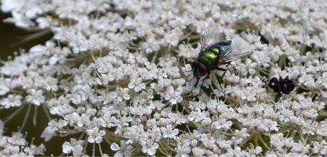 Insectopbloem.jpg