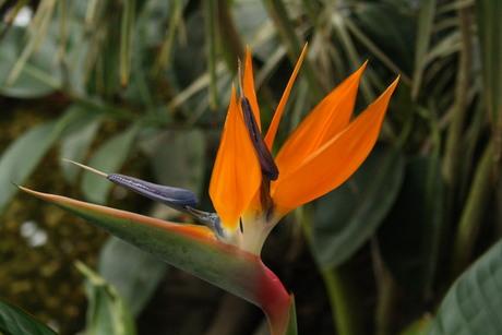 Flitsend oranje