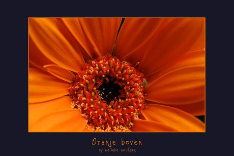 Oranje boven!