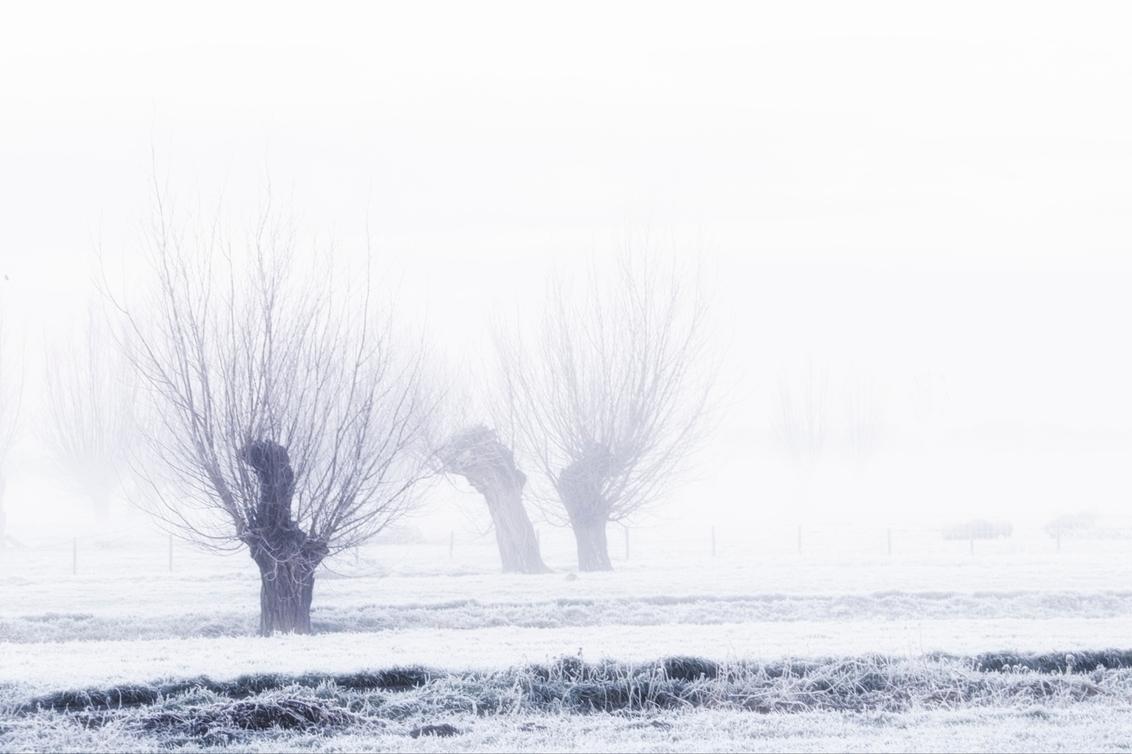 9 jan 2021 tóch een kleine witte wereld....3070 - - - foto door onne1954 op 09-01-2021 - deze foto bevat: lucht, natuur, licht, winter, ijs, landschap, mist, bomen, polder