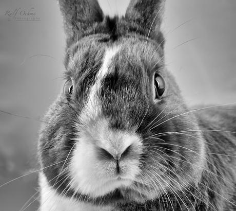Bunny_sw