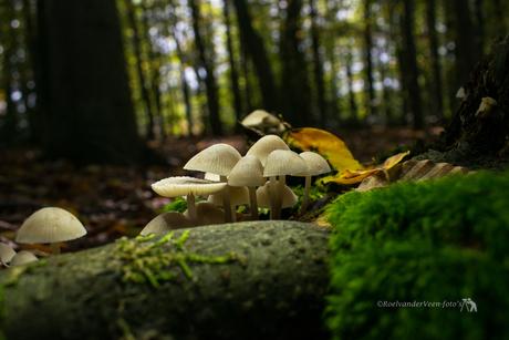verscholen in het donkere bos