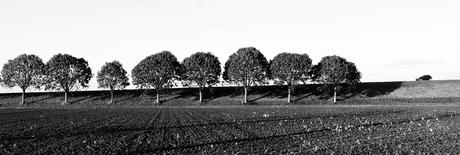 trees : car