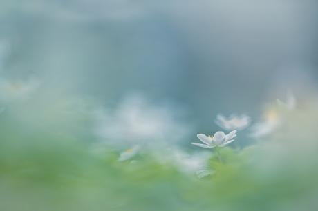 In het bloembed