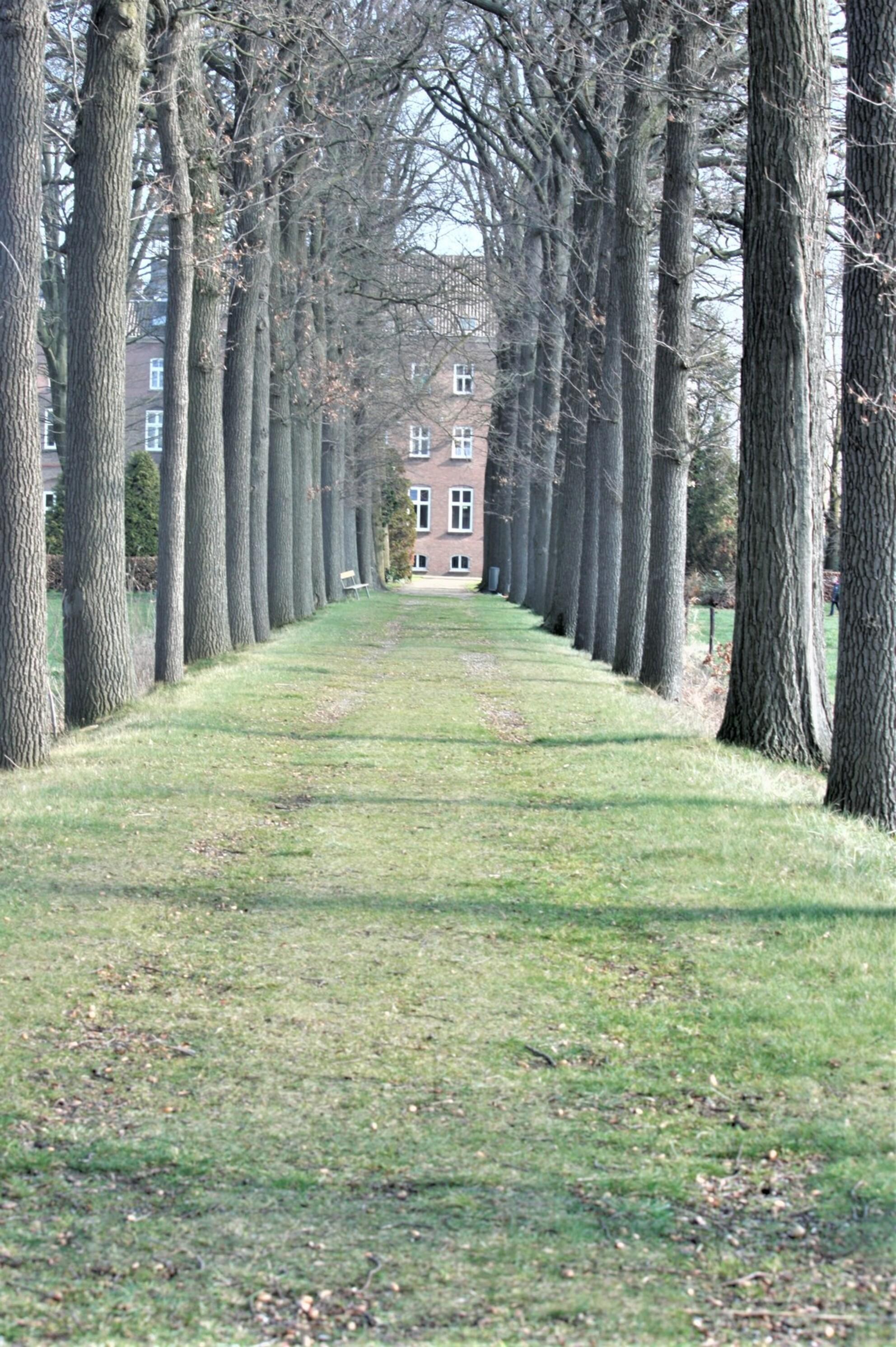 tree's troughtway - - - foto door sweetnic86 op 28-02-2021 - deze foto bevat: bomen - Deze foto mag gebruikt worden in een Zoom.nl publicatie