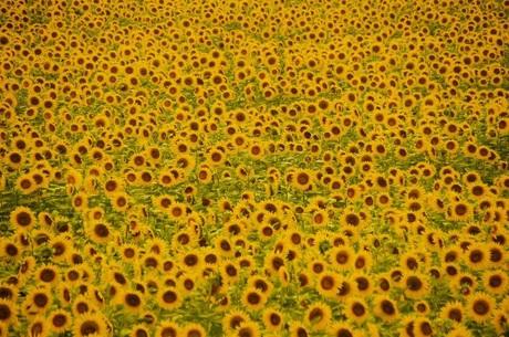 Toch van Gogh