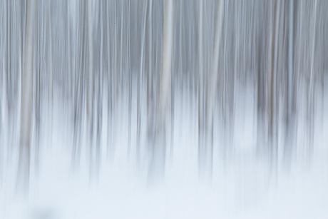 In het bos.