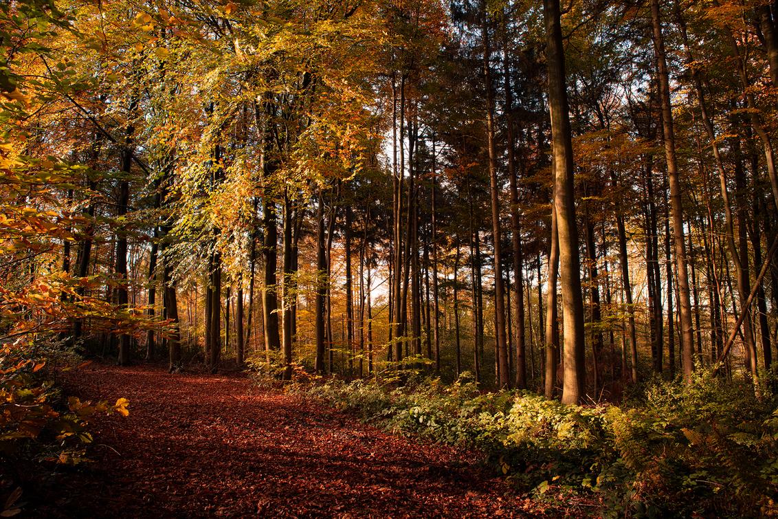 VIJLENERBOS1 - Vijlenerbos - foto door TonGeers op 16-11-2020 - deze foto bevat: natuur, herfst, landschap, bos, bomen, laan, vijlenerbos
