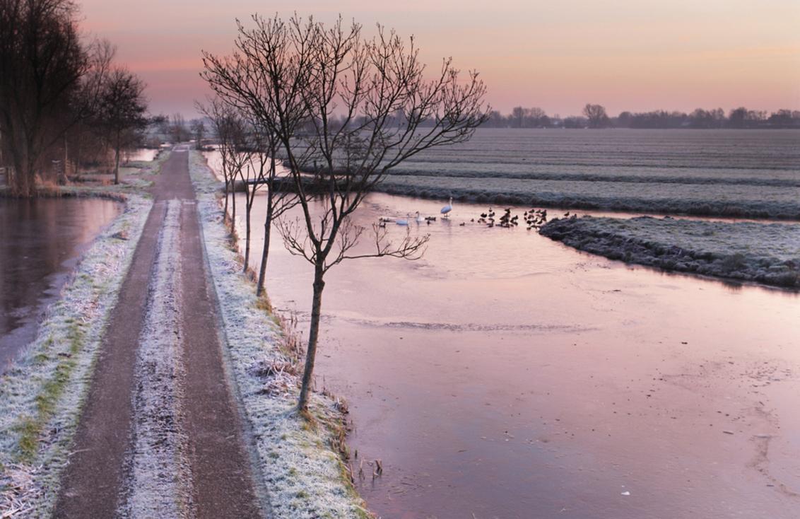 bevroren polder - het beeld van de korte winter die we tot nu toe hebben gehad in de polder. - foto door b.neeleman op 23-01-2016