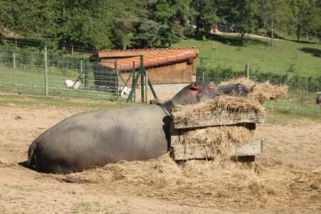 Vakantiegevoel - Elk wezen is wel eens toe aan vakantie - foto door smorrie op 02-10-2011 - deze foto bevat: vakantie, nijlpaard