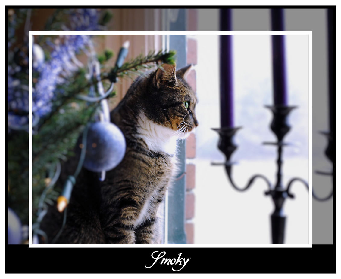 Smoky - Smoky bij de kerstboom - foto door spitsoor op 18-12-2009