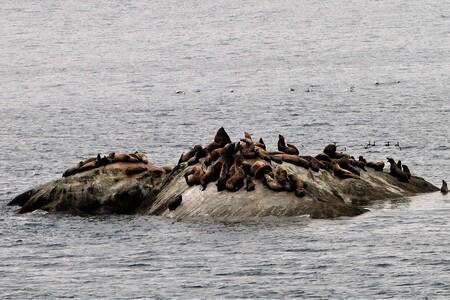 alaska robbeneiland - eiland met robben in Alaska bay.... - foto door jh- op 02-03-2021 - deze foto bevat: zee, water, dieren, ijs, amerika, reisfotografie
