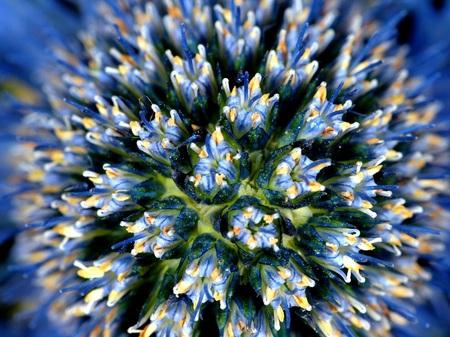 B kl.jpg - Soms is het hart van een bloem een boeket op zich.... - foto door dickvanderstoep op 20-11-2013 - deze foto bevat: macro, blauw, bloem, boeket