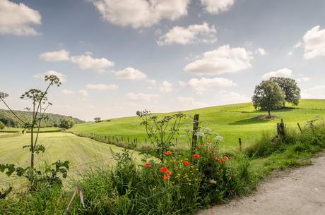 zomer in Limburg