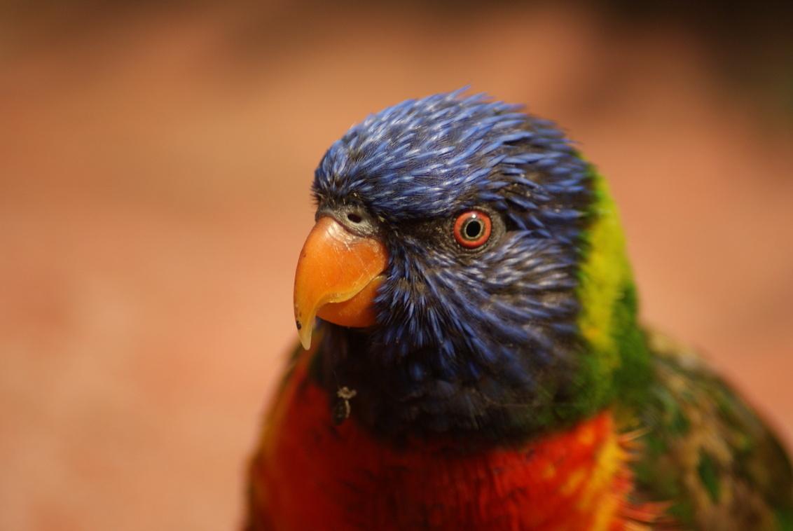 Papagaai - - - foto door TrudyH op 10-05-2009 - deze foto bevat: natuur, vogels, dieren, vogel, papagaai, trudyh
