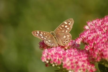 Vlinder in de tuin!