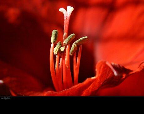Bloom...lll