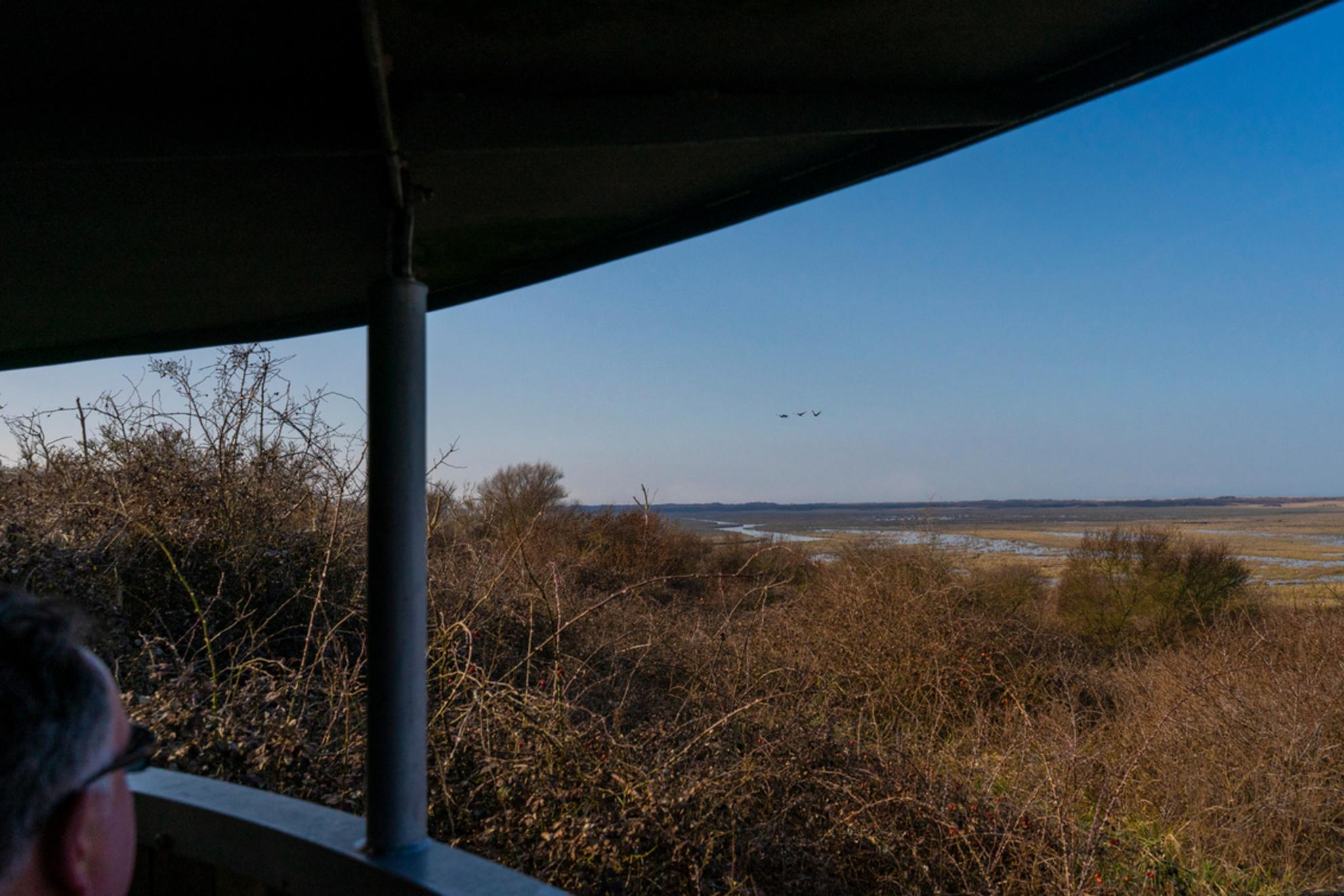 Hij ziet ze vliegen . - Vogels spotten bij de kwade hoek .(even groot kijken) - foto door bergmanfotografie op 03-03-2021 - deze foto bevat: natuur, nederland