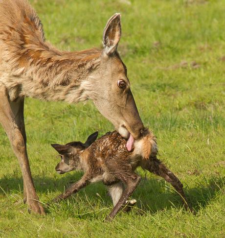 Moederliefde!