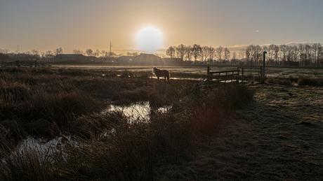Shetland pony in de ochtend zon