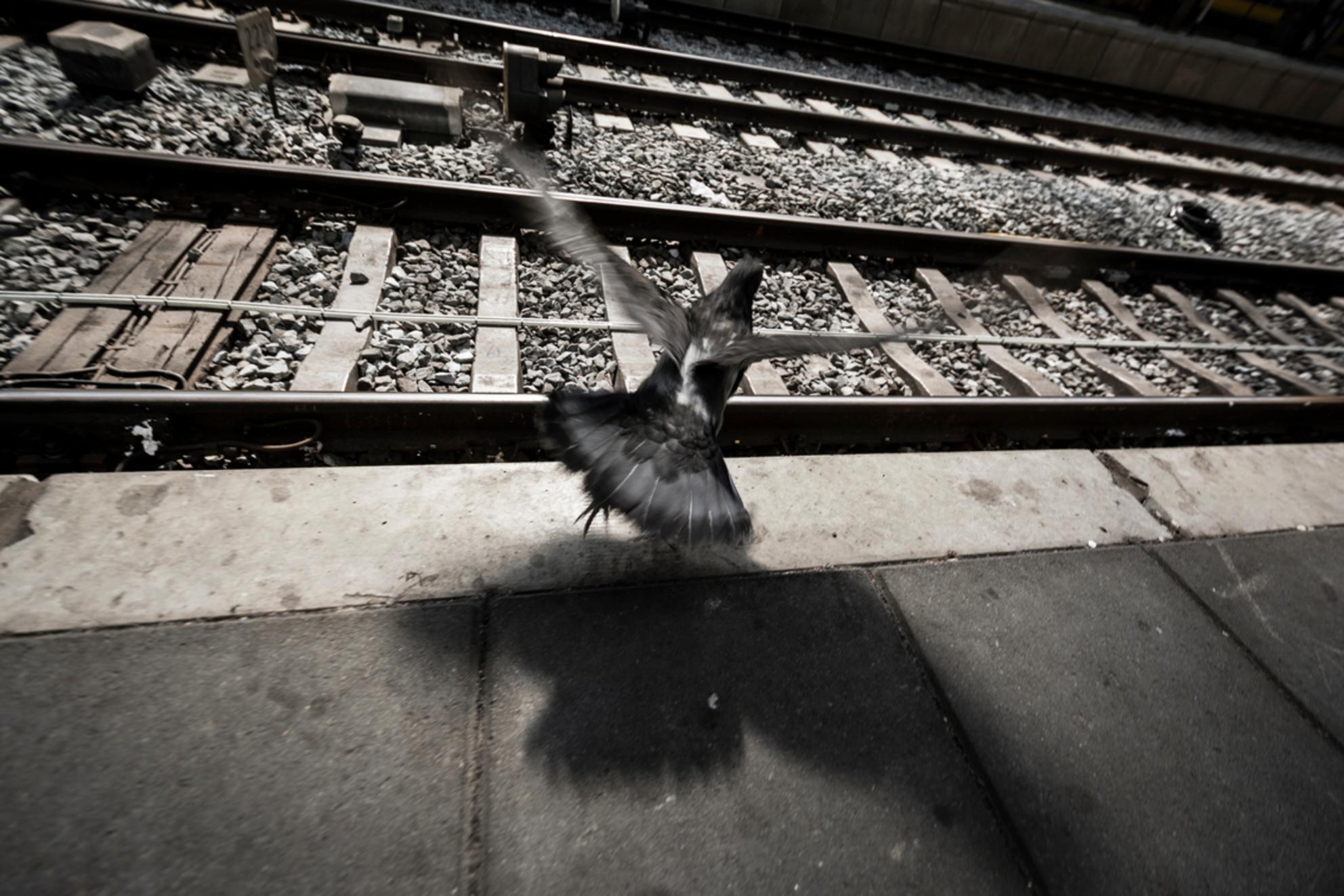 Vlieg je mee of blijf je wachten? - Kijk ook eens op www.luvo-photography.com!  Ik zat te wachten op de trein en de duiven bleven komen en gaan.. Ik vlieg graag mee dacht ik nog, maar - foto door tieme.jr op 01-05-2014 - deze foto bevat: amsterdam, donker, kleur, vlieg, licht, trein, beeld, duif, vliegen, reizen, schaduw, nikon, nederland, beweging, straatfotografie, vlucht, details, vluchten, D7100