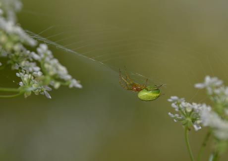 Kleurrijk spinnetje.....