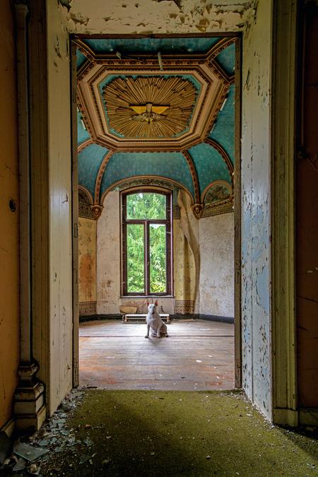 Beautiful ... Floor-to ceiling - - - foto door info-2708 op 25-07-2015 - deze foto bevat: kasteel, dieren, huisdier, hond, plafond, raam, claire, verlaten, urbex, behang, decay, bullterrier, schilderingen, bull terriër