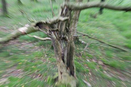 misselijke boom