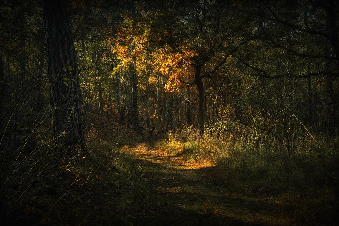 Licht in het bos - Een zonnige plek op een donker bospad in de Boswachterij Westenschouwen. - foto door apadmos op 29-11-2018 - deze foto bevat: natuur, herfst, landschap, bos, tegenlicht, zeeland, schouwen, boswachterij, westenschouwen