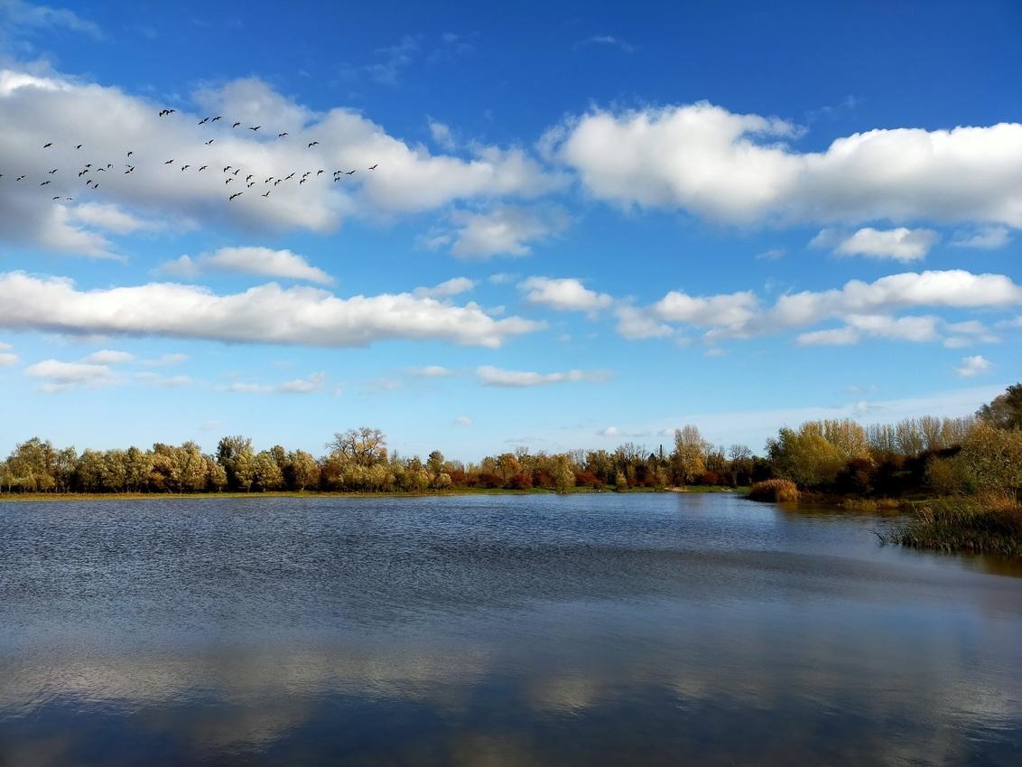Landschap - Foto gemaakt in natuurgebied de Blauwe kamer Wageningen/Rhenen. - foto door Marcella7 op 27-02-2021 - deze foto bevat: lucht, wolken, water, natuur, vogels, spiegeling, landschap, bomen