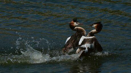 Vechtsport op het water