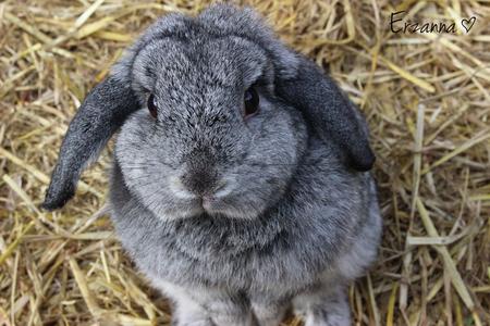 Konijntje - Een super lief konijntje, als je stopt met aaien kijkt ze je vragend aan waarom. - foto door Erzanna op 13-06-2015 - deze foto bevat: huisdier, konijn