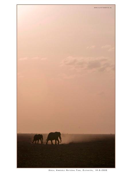 Amboseli NP, Kenia
