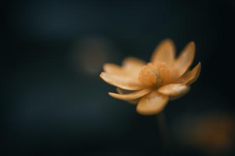 bloempje
