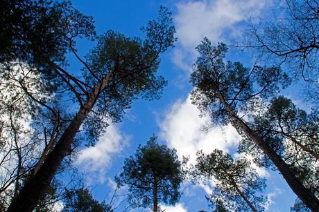 Into the blue sky