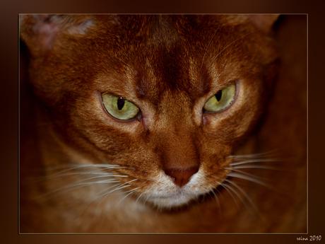 Portret Wibi