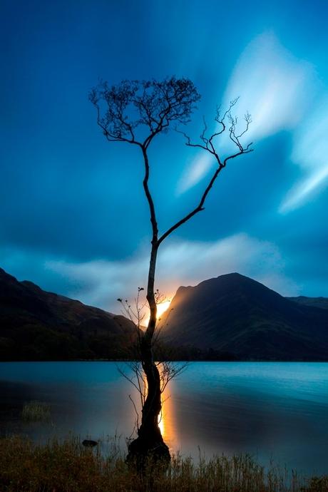 Eenzame boom van Buttermere