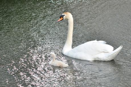 Moeder & jong.JPG