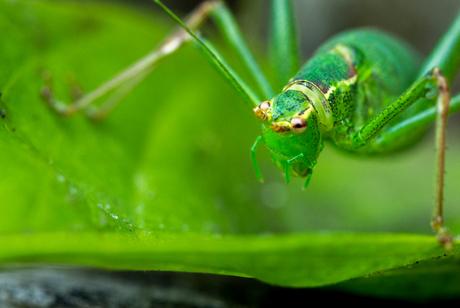 Little green monster