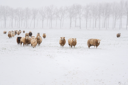 Genieten van de winter 2021 - De eerste serieuze sneeuwdag in 2021 was echte genieten. - foto door Vivo op 09-02-2021 - deze foto bevat: natuur, sneeuw, winter, dieren, landschap, nederland
