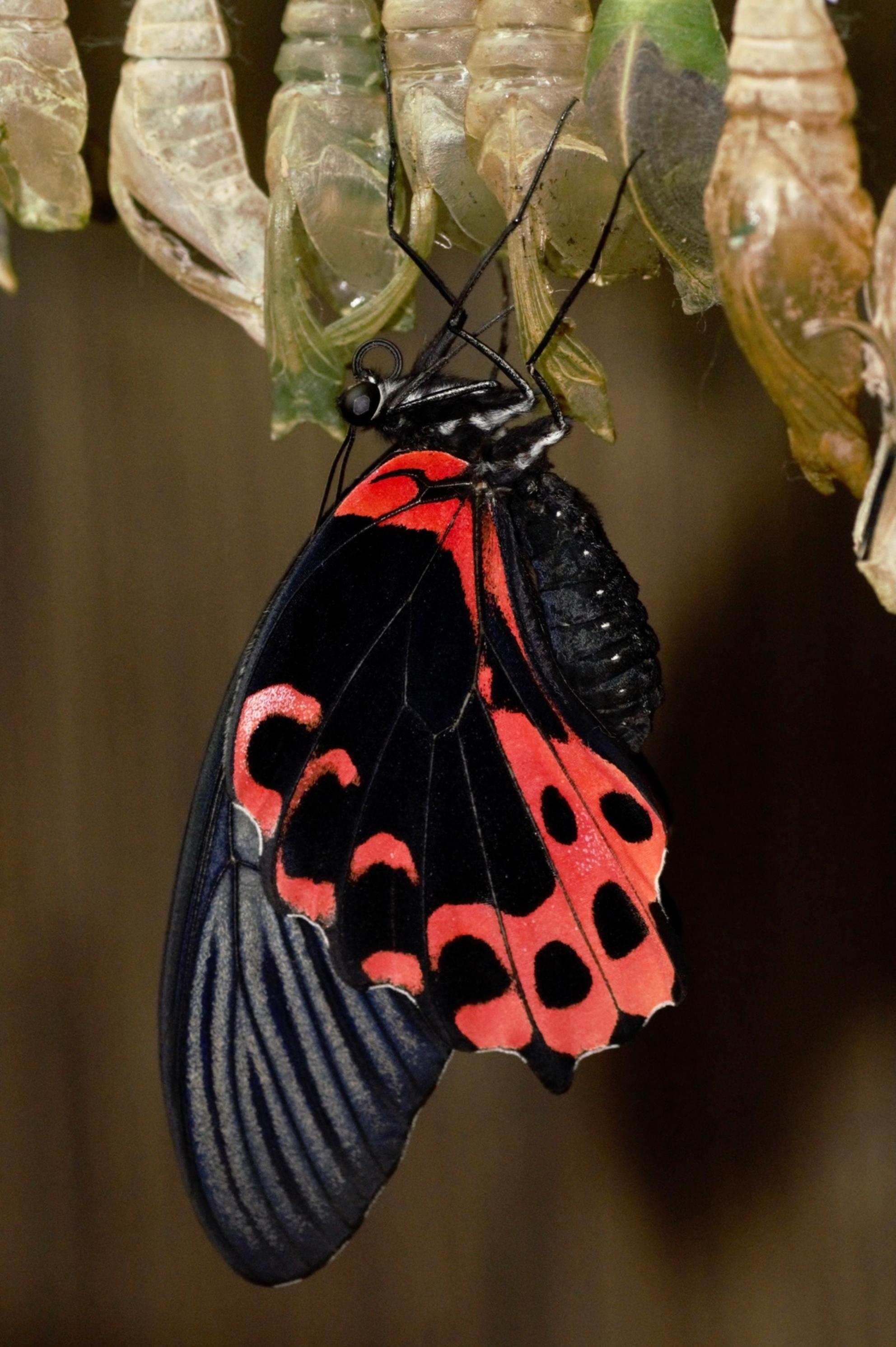 Klaar voor vertrek.... - En na het oppompen klaar voor vertrek.... - foto door PetraD1966 op 04-12-2020 - deze foto bevat: vlinder, vlindertuin - Deze foto mag gebruikt worden in een Zoom.nl publicatie
