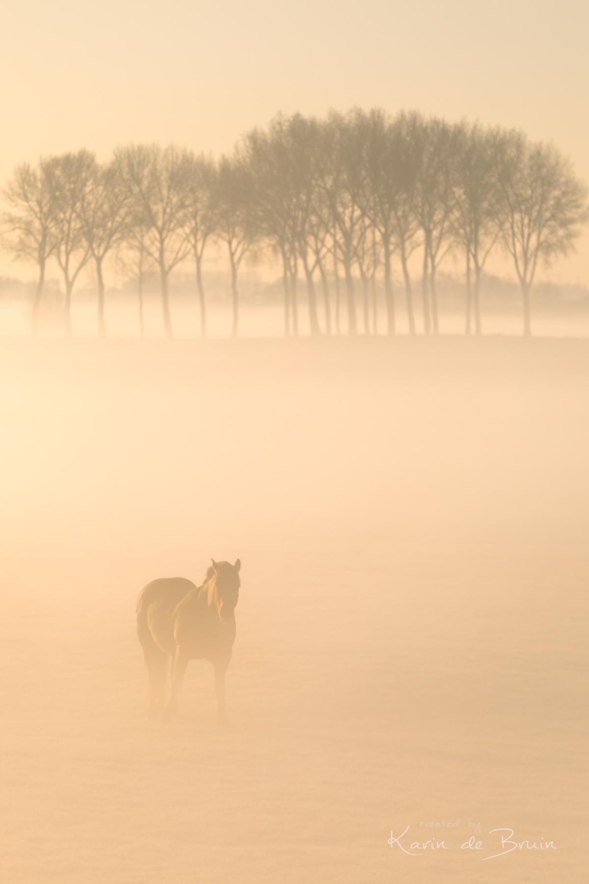 Gazing in the Mist! - Vol in de remmen toen ik zag hoe deze beauty naar me stond te lonken. - foto door KarindeBruin op 28-04-2021 - locatie: 3216 Abbenbroek, Nederland - deze foto bevat: mist, polder, bomen, paard, abbenbroek, hellevoetsluis, voorne putten, atmosfeer, ecoregio, lucht, boom, natuurlijk landschap, mist, werkend dier, biome, zonsopkomst, schemer