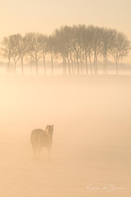 Gazing in the Mist!