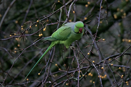 Hap - . - foto door Time---traveler op 13-04-2021 - deze foto bevat: vogel, takje, afdeling, fabriek, bek, papegaai, organisme, terrestrische plant, boom, natuurlijk materiaal