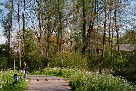 Natuurgebied Klopvaart in de wijk Overvecht te Utrecht.
