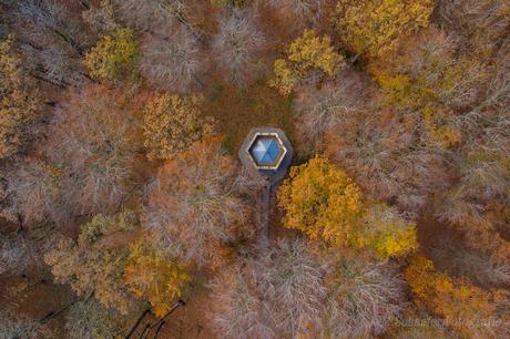 Prieel in een herfstbos