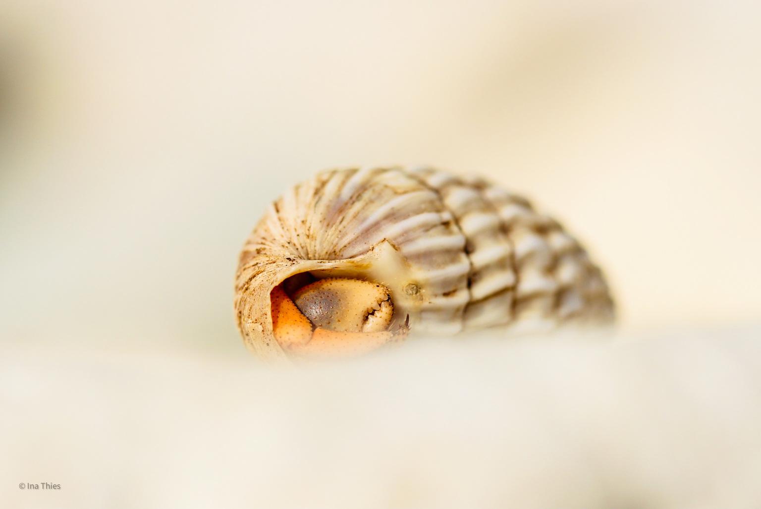 Heremietkreeftje. - Heremietkreeftje  - foto door Inathies op 15-04-2021 - locatie: Bonaire, Caribisch Nederland - deze foto bevat: oog, menselijk lichaam, hout, shell, terrestrische dieren, natuurlijk materiaal, spiraal, nagel, snuit, slakken en naaktslakken
